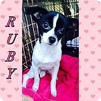 Adopt A Pet :: Ruby - Killian, LA