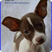 Adopt A Pet :: Garlic - Simi Valley, CA