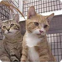 Adopt A Pet :: Butterscotch & Sean - Deerfield Beach, FL