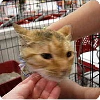 Adopt A Pet :: Gigi - Jacksonville, FL