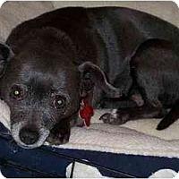 Adopt A Pet :: Daizy (Flagstaff) - Scottsdale, AZ
