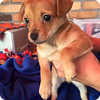 Adopt A Pet :: Fiona - North Hollywood, CA