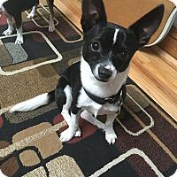 Adopt A Pet :: Obie - Chicago, IL