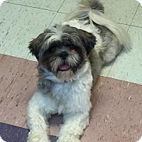 Adopt A Pet :: BANDIT - Metairie, LA