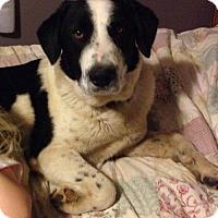 Adopt A Pet :: Barbie - Maple Grove, MN