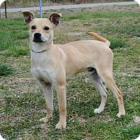 Adopt A Pet :: Link - Parsons, KS