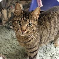 Adopt A Pet :: Savannah - Naperville, IL