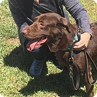 Adopt A Pet :: Twix - Jay, NY
