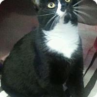 Adopt A Pet :: Layna Marie - Reston, VA
