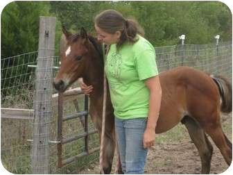 Appaloosa for adoption in Dewey, Illinois - Ace