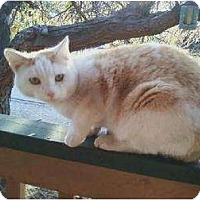 Adopt A Pet :: Garfield - Wenatchee, WA