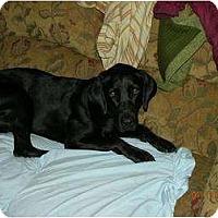 Adopt A Pet :: Duffy - Alliance, NE