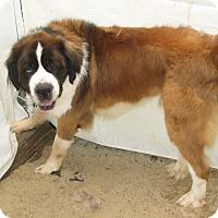 Adopt A Pet :: BAYTHOVEN and SOFEE - ADOPTED - Sudbury, MA