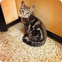 Adopt A Pet :: Sergeant - Chesterfield Township, MI