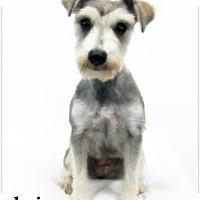 Adopt A Pet :: Lois - Pascagoula, MS