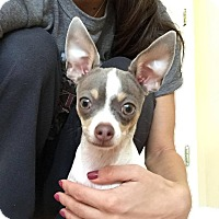 Adopt A Pet :: Florence - Chicago, IL
