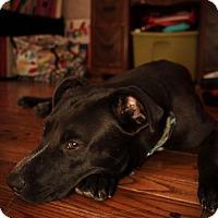 Adopt A Pet :: Pilgrim - Millersville, MD