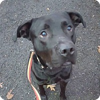 Adopt A Pet :: Dasher - Bloomfield, NJ