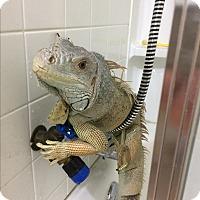 Adopt A Pet :: Miss River - St. Paul, MN