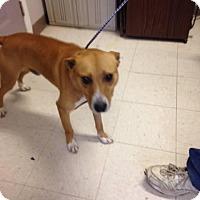 Adopt A Pet :: Willis - Rexford, NY