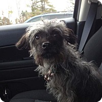 Adopt A Pet :: Clyde - Baltimore, MD