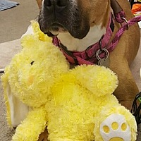 Adopt A Pet :: Bessy - Phoenix, AZ