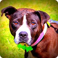 Adopt A Pet :: CeCe ~ so sweet ~ meet me! - Glastonbury, CT