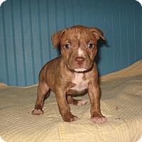 Adopt A Pet :: Roo - KANNAPOLIS, NC