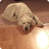 Adopt A Pet :: Libby - Cedar, MN