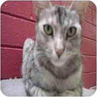 Adopt A Pet :: Giselle - Phoenix, AZ