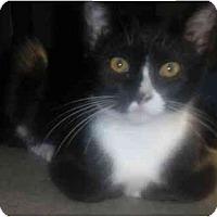 Adopt A Pet :: Terese - Summerville, SC