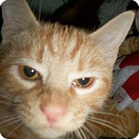 Adopt A Pet :: Riley - Audubon, NJ