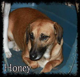 Shepherd (Unknown Type) Dog for adoption in Crandall, Georgia - Honey