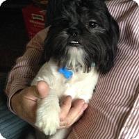 Adopt A Pet :: Murphy - Conway, AR