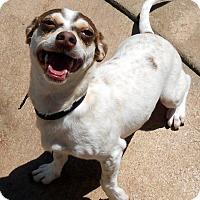 Adopt A Pet :: Baby Jonah - Oakley, CA