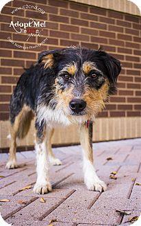Cattle Dog Mix Dog for adoption in Charlotte, North Carolina - Chachi
