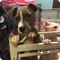 Adopt A Pet :: Toby - Albemarle, NC