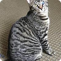 Adopt A Pet :: Mystic - Youngsville, NC