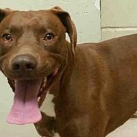 Adopt A Pet :: QUINN - Rogers, AR