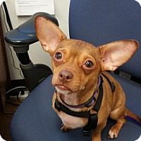 Adopt A Pet :: Rudy - Memphis, TN