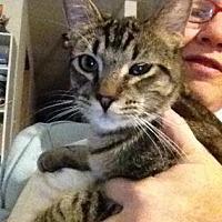 Adopt A Pet :: Archibald - Oklahoma City, OK