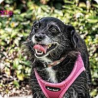 Adopt A Pet :: MAXIE - San Juan Capistrano, CA