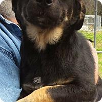 Adopt A Pet :: Jade - Southington, CT