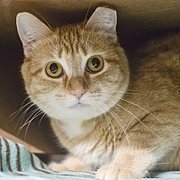 Adopt A Pet :: Sandy - Whitehall, PA