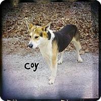 Adopt A Pet :: COY - Princeton, KY