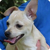 Adopt A Pet :: A - CLAIRE - Raleigh, NC
