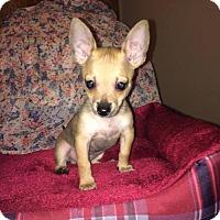 Adopt A Pet :: Matcha - Los Banos, CA