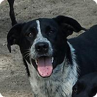 Adopt A Pet :: Jessica - Snow Hill, NC
