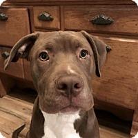 Adopt A Pet :: JB Yogi - San Diego, CA