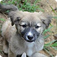 Adopt A Pet :: Billie - New Boston, NH